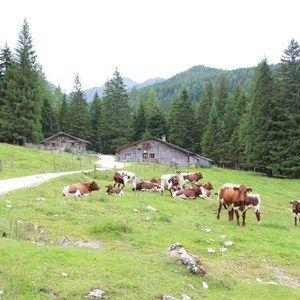 HIT-SBG Forstau Hütte/Hut 13 Pers.