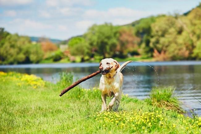 Urlaub mit Hund im Bergresort Seefeld **** Superior