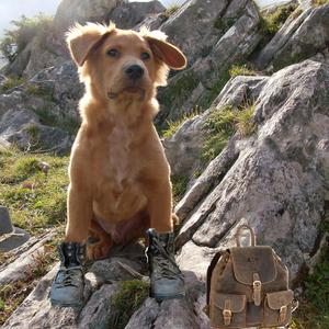 Urlaub mit Hund im Feriendorf Hohentauern