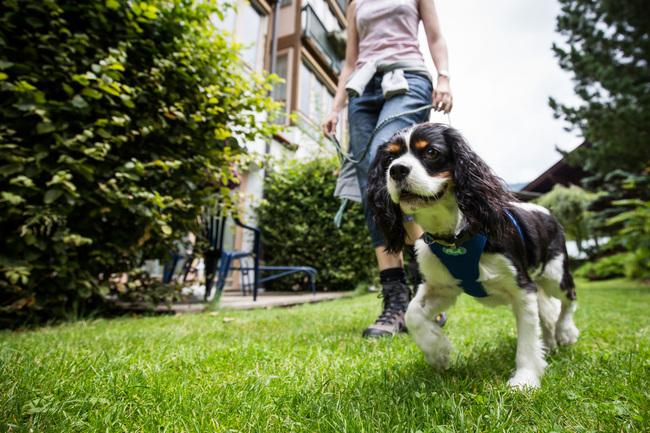 Urlaub mit Hund im Ortners ESCHENHOF - Alpine Slowness ****